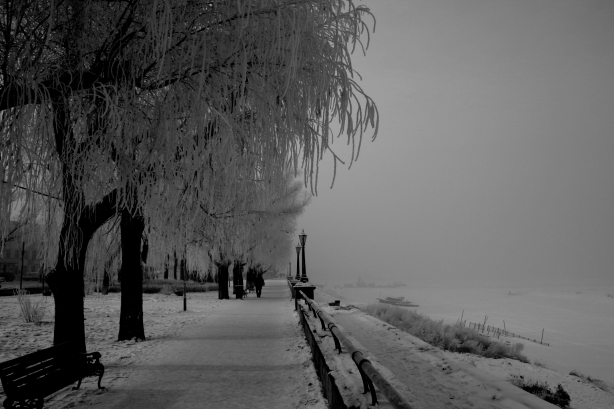 By the frozen river, Haerbin, northern China - hoarfrost clings to the trees as warm vapour freezes over night onto their branches. The river to the side is frozen solid in the -40C environment.